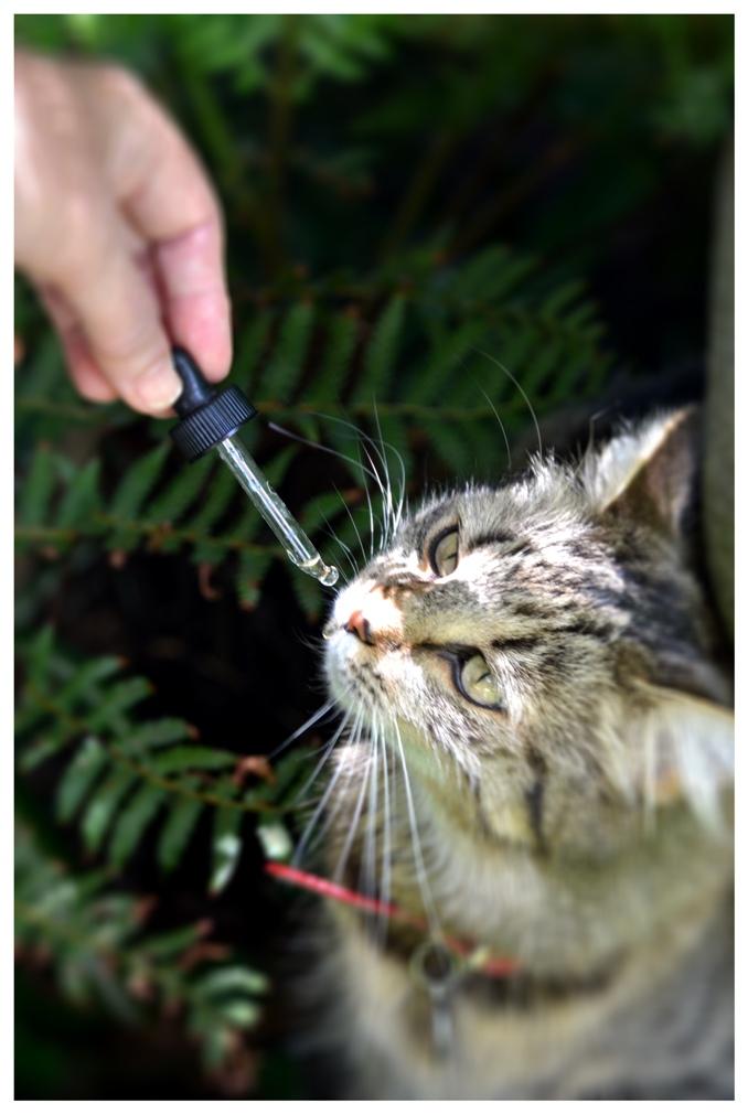come dare i fiori di bach agli animali