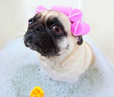 come scegliere lo shampoo per il cane
