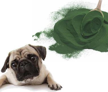 alga spitulina per il cane