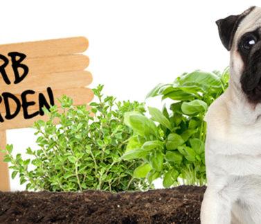 Erbe aromatiche che fanno bene al cane