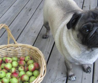 una mela al giorno al cane