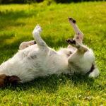 Consigli naturali pulci e zecche cane