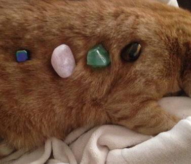 cristalli e animali