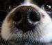 naso secco cane
