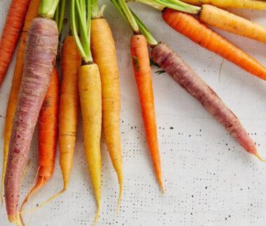 verdure e ortaggi per cane